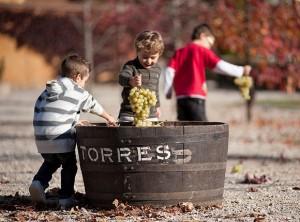 Torres Wineries